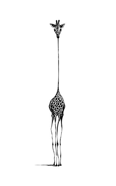 ilustração | nicole cioffe