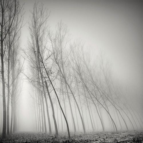 árvore-no-nevoeiro