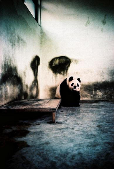 panda-encarcerado