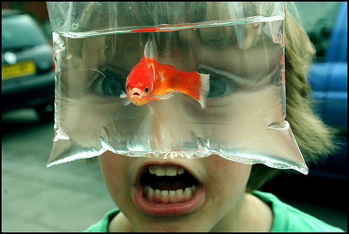peixe-garoto