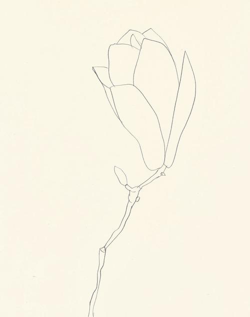 ilustração | ellsworth kelly
