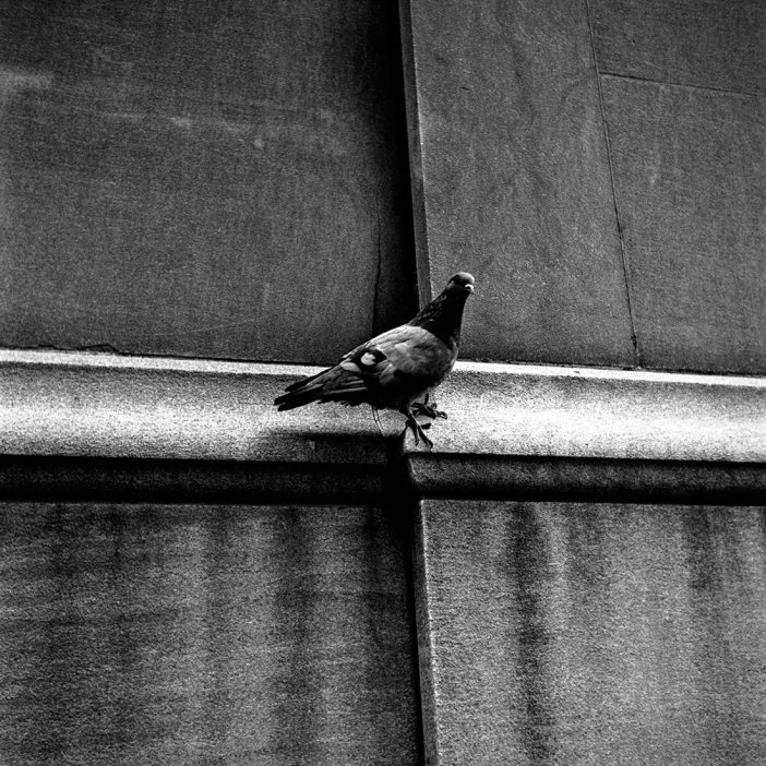 Foto   Vivian Maier