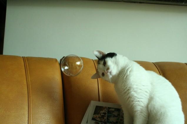 gato-e-bolha